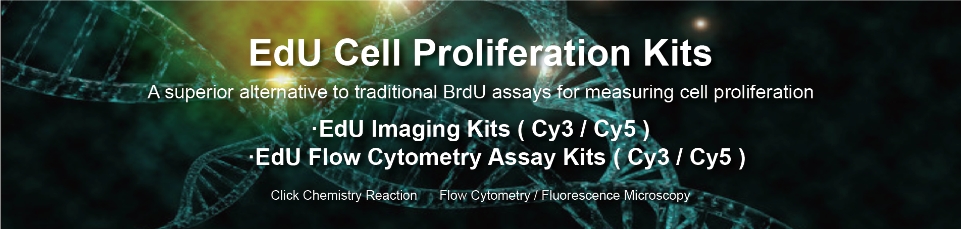 EdU Cell Proliferation Kits