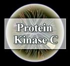 Protein-Kinase-C