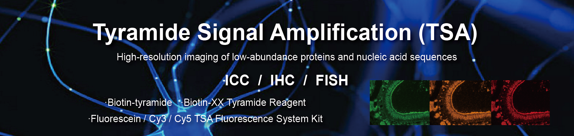 Tyramine Signal Amplification (TSA) Series