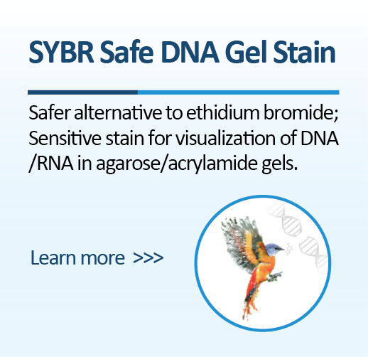 SYBR Safe DNA Gel Stain