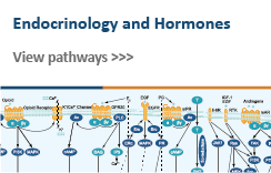 Endocrinology and Hormones