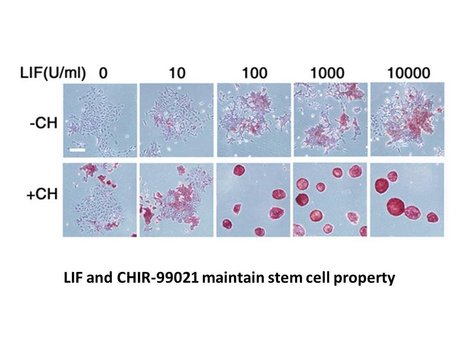 CHIR-99021