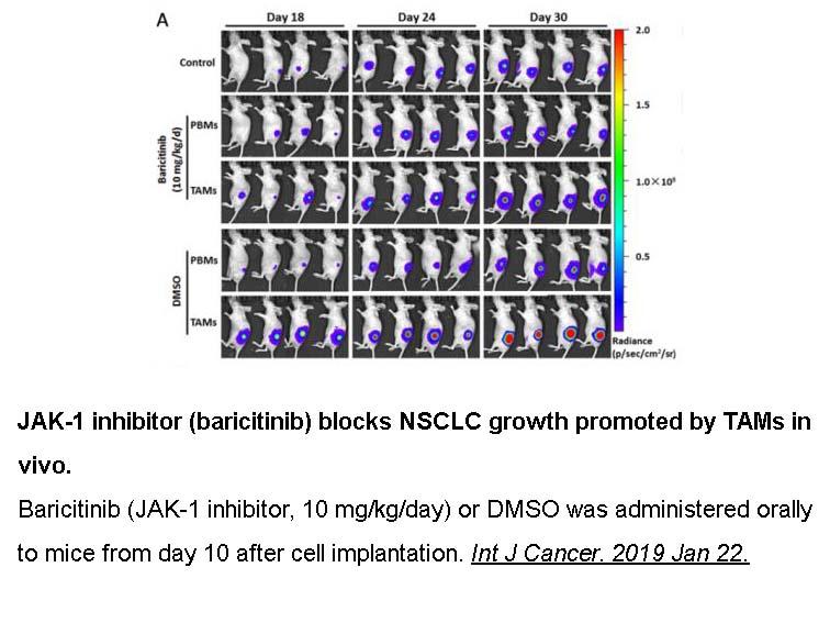 Baricitinib (LY3009104, INCB028050)