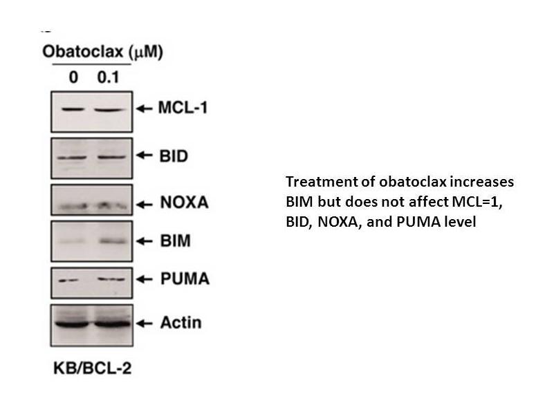 Obatoclax mesylate (GX15-070)