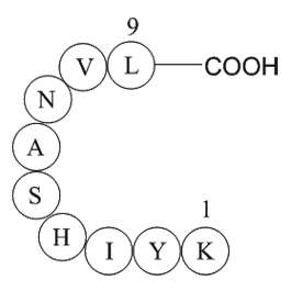 MAP kinase fragment [Multiple species]
