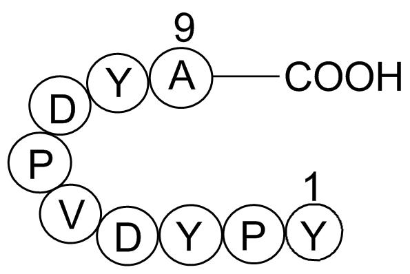 Influenza Hemagglutinin (HA) Peptide