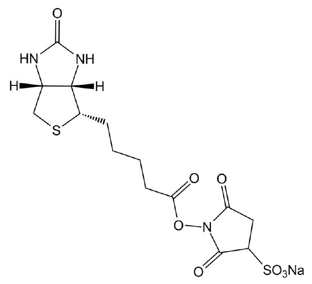 Sulfo-NHS-Biotin