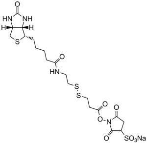 Sulfo-NHS-SS-Biotin