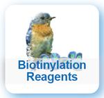Biotinylation Reagents