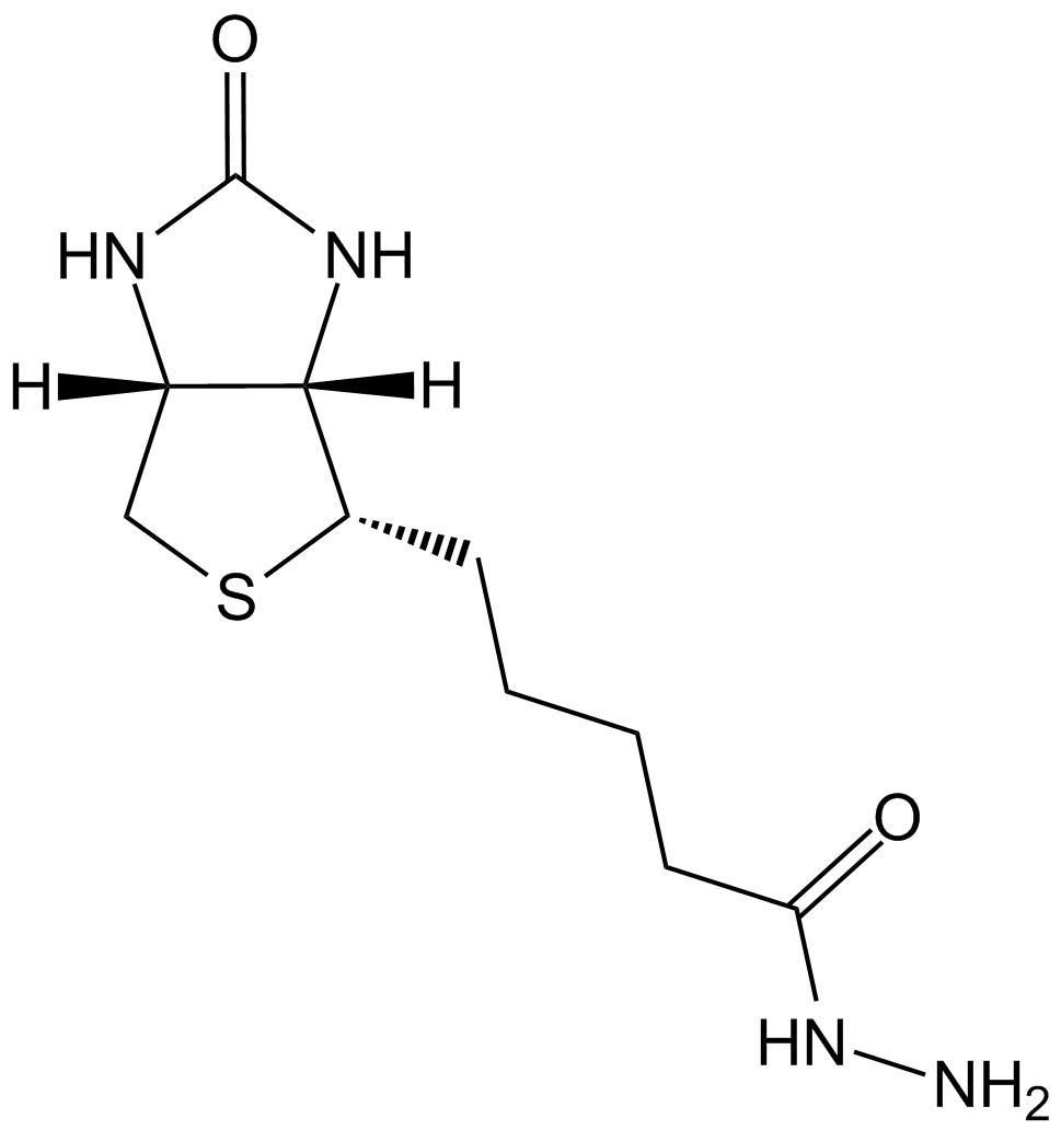 Hydrazide fv vs gs