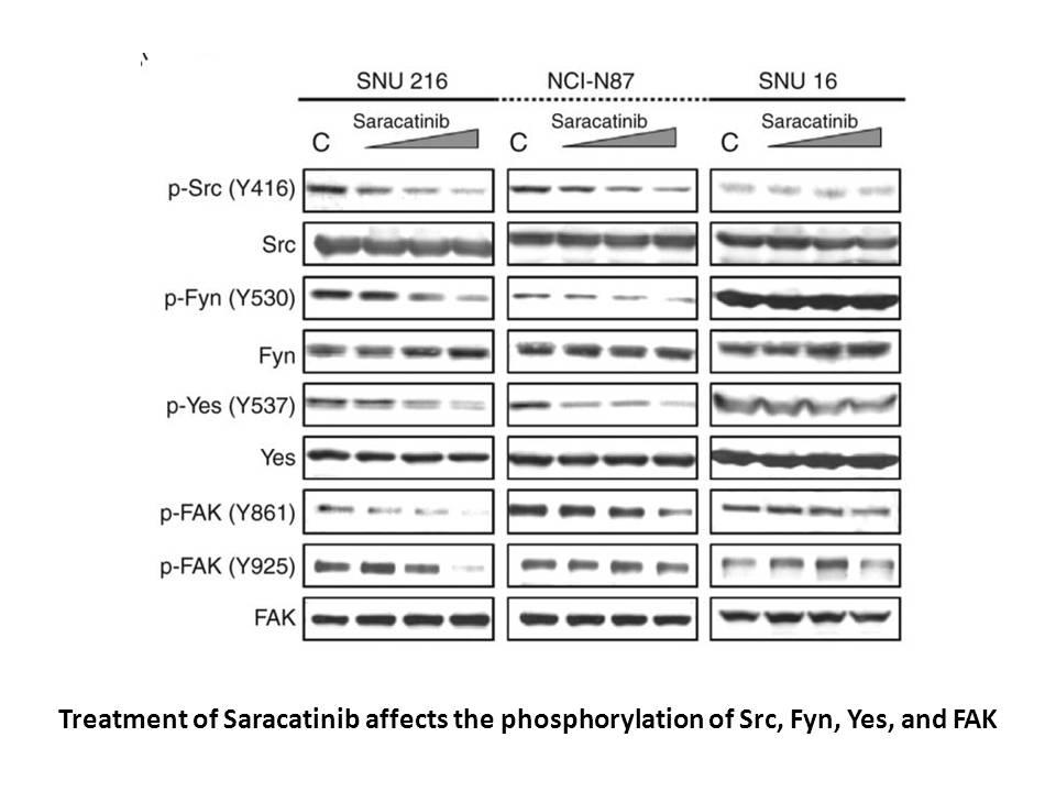 Saracatinib (AZD0530)