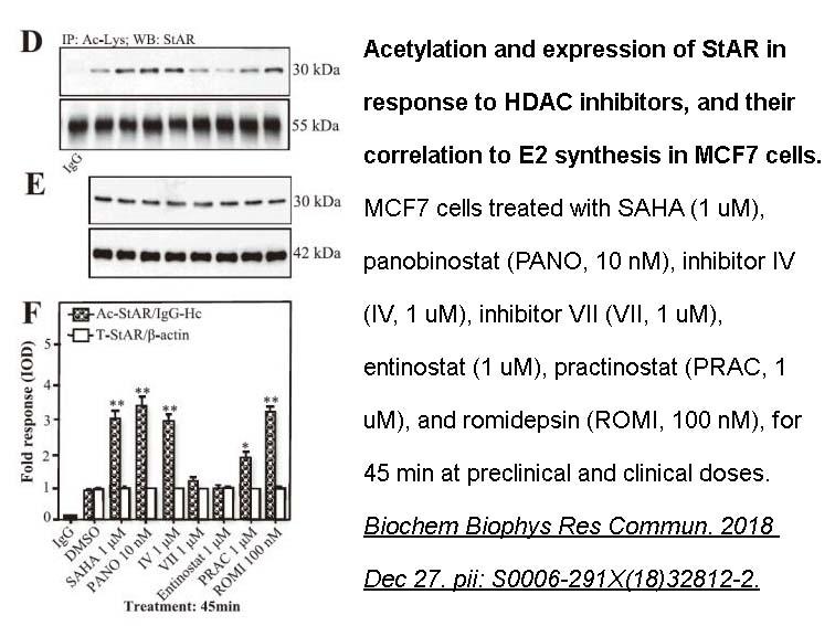APExBIO - Pracinostat (SB939)|Pan-HDAC inhibitor|CAS# 929016-96-6