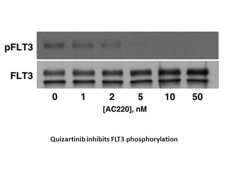 Quizartinib (AC220)