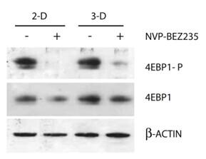 BEZ235 (NVP-BEZ235)