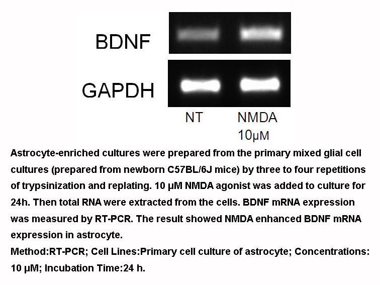 NMDA (N-Methyl-D-aspartic acid)