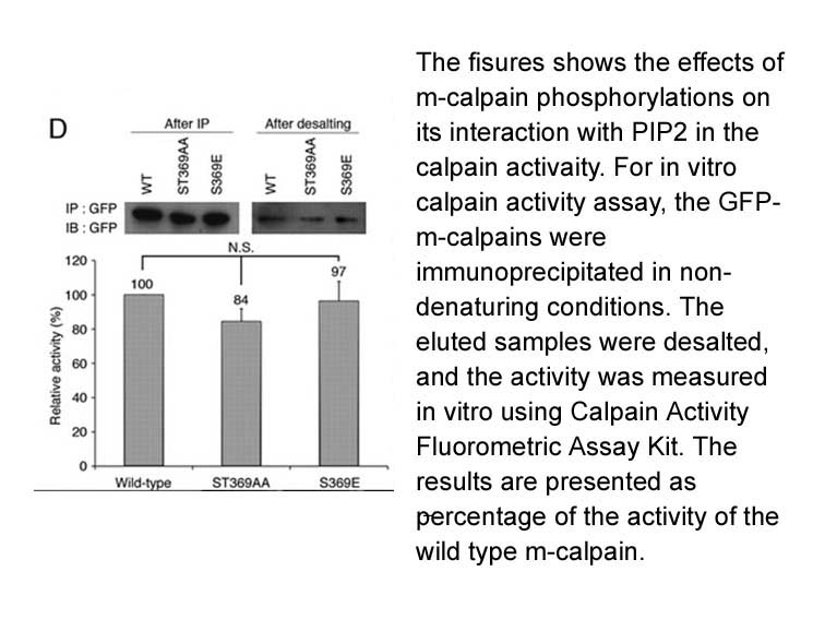 Calpain Activity Fluorometric Assay Kit
