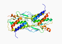 IL-15, human recombinant protein