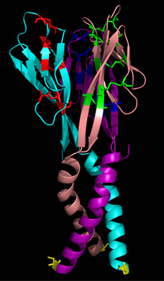 Resistin, human recombinant protein